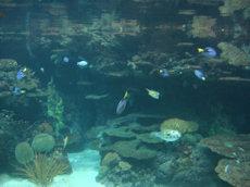 aquarium Burgers zoo