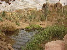 woestijn Burgerszoo