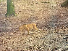 leeuwin Burgers zoo