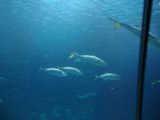 Vissen in diergaarde Blijdorp